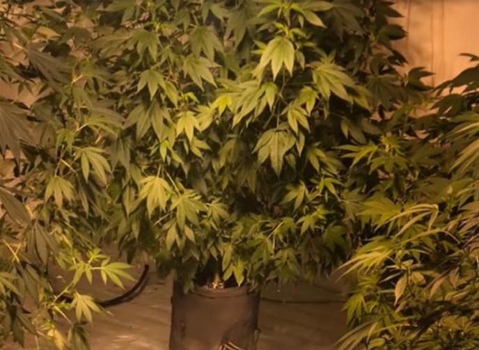 Марихуана в мурманску марихуана и табаков